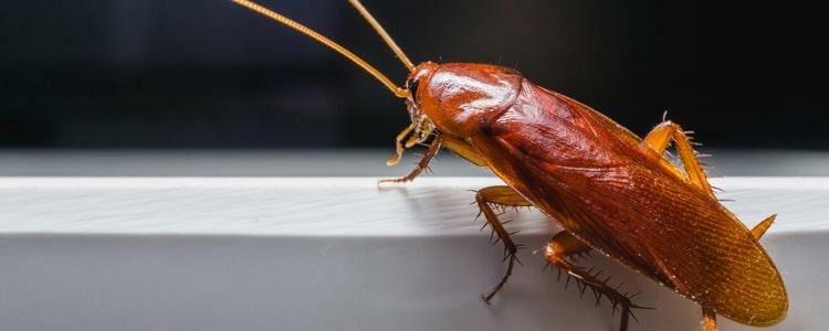 Cockroach Control Paradise Point